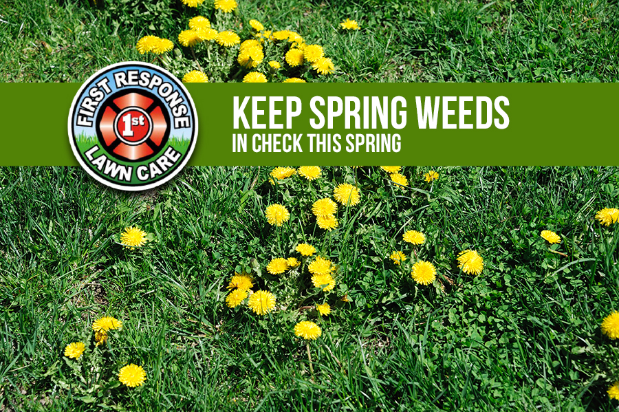 Keep Spring Weeds in Check This Season