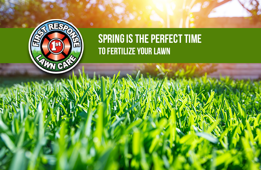 Spring is the perfect time to fertilize your lawn