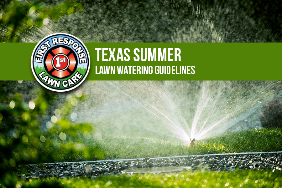 Texas Summer Lawn Watering Guidelines