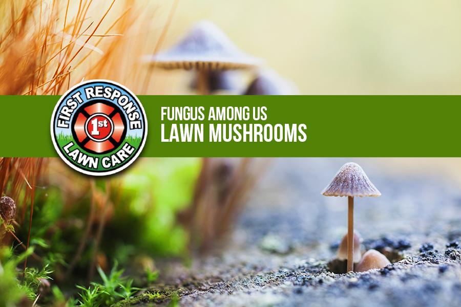 Fungus Among Us Lawn Mushrooms