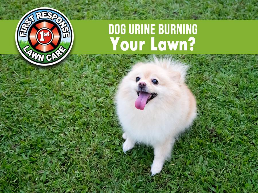 Dog Urine Burning Your Lawn?