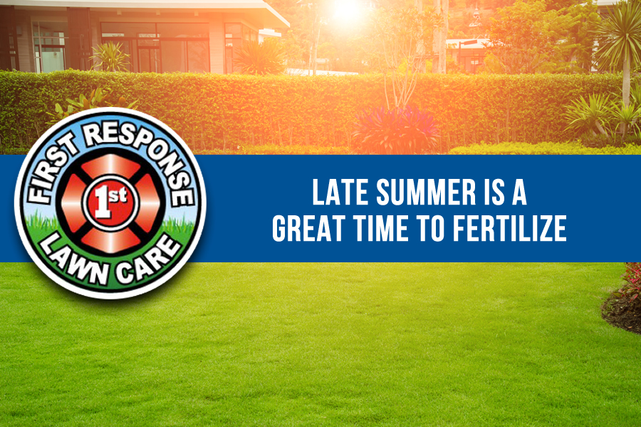 fertilize late summer