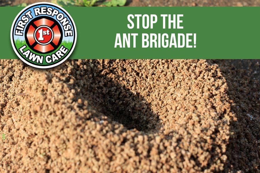 Stop the Ant Brigade