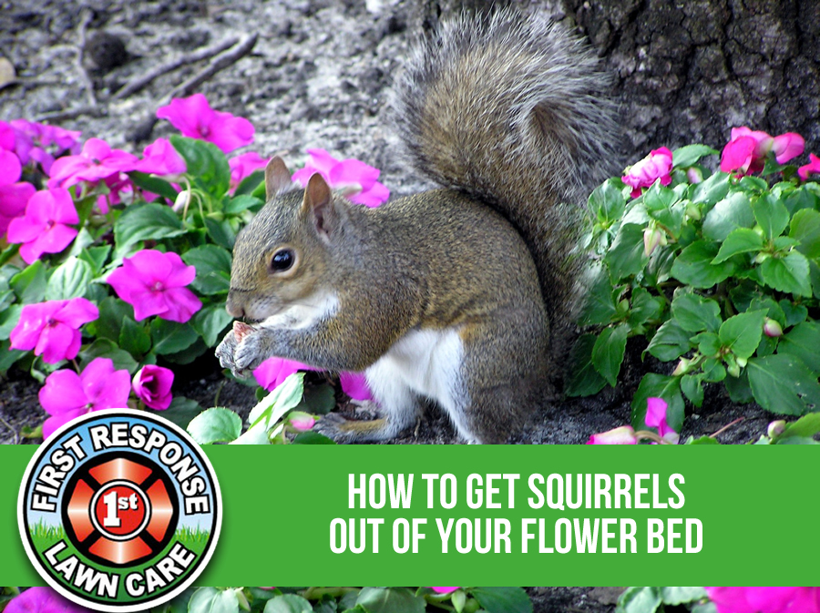 How To Get Squirrels Out Of Your Flower Bed