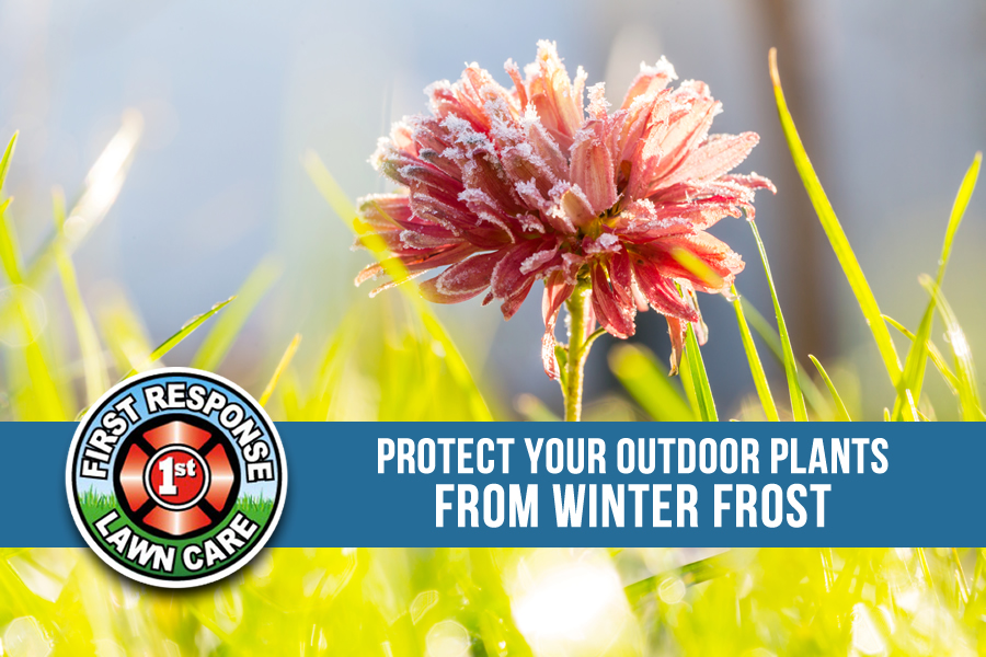 Protecting Outdoor Plants from Texas Frost