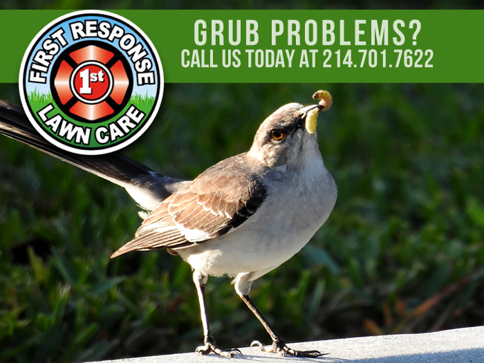 Grub Control Rockwall