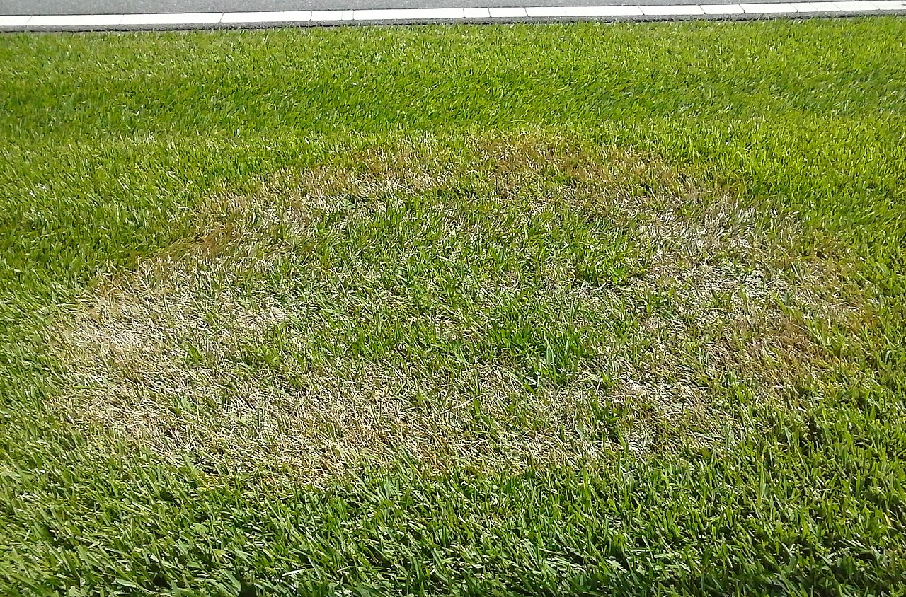 Seeing Brown Spots In Your Yard