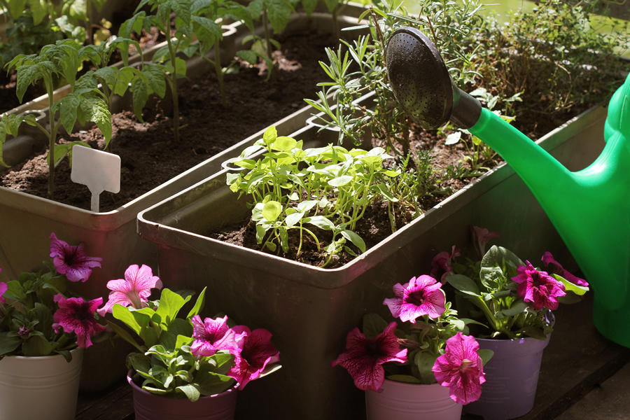 Time to Plant Fall Vegetables