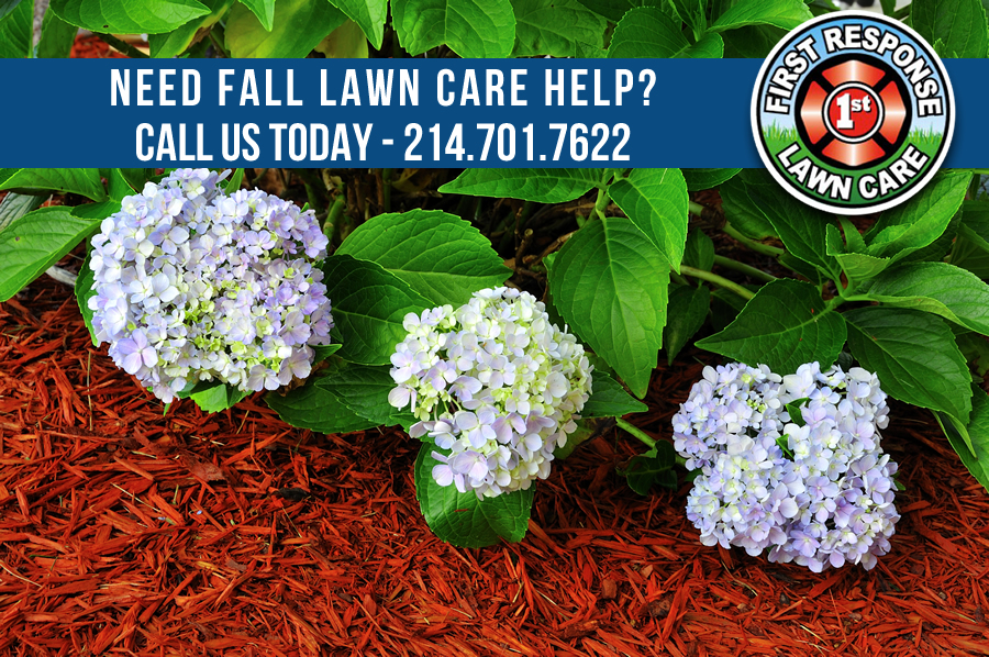 Fall Lawn Tips for North Texas