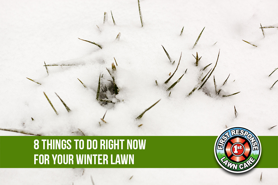 8 Things To Do Right Now For Your Winter Lawn