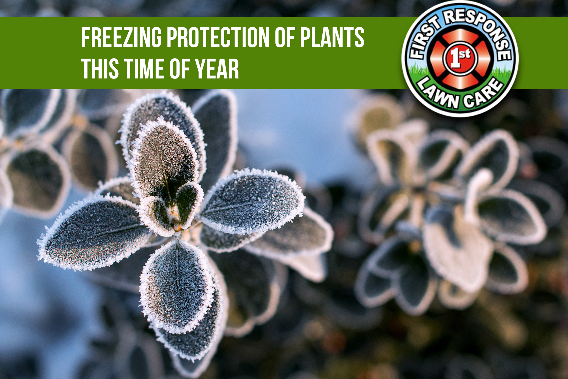Freezing Protection of Plants this Time of Year