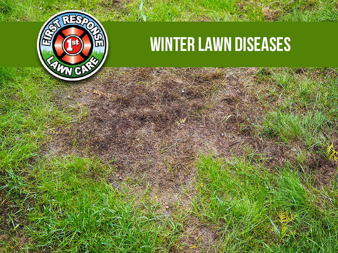 Winter Lawn Diseases