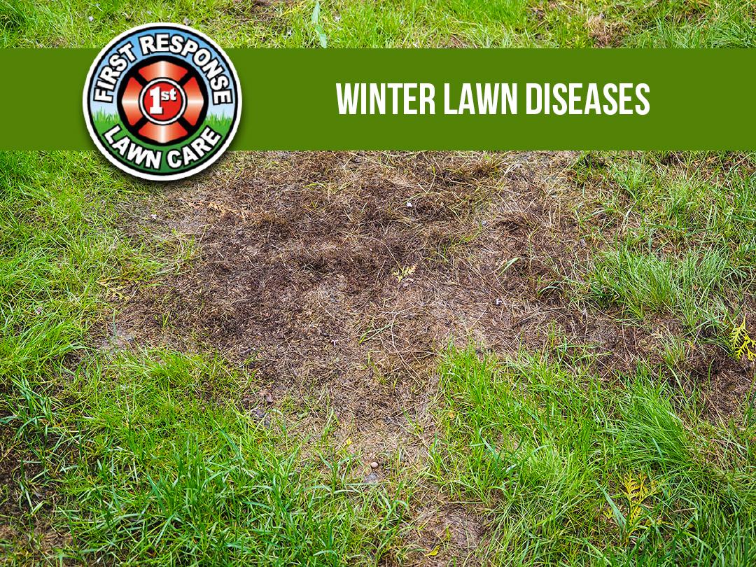 Winter Lawn Diseases