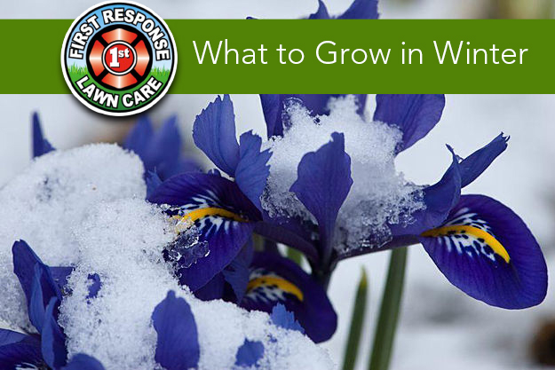 What To Grow In Winter