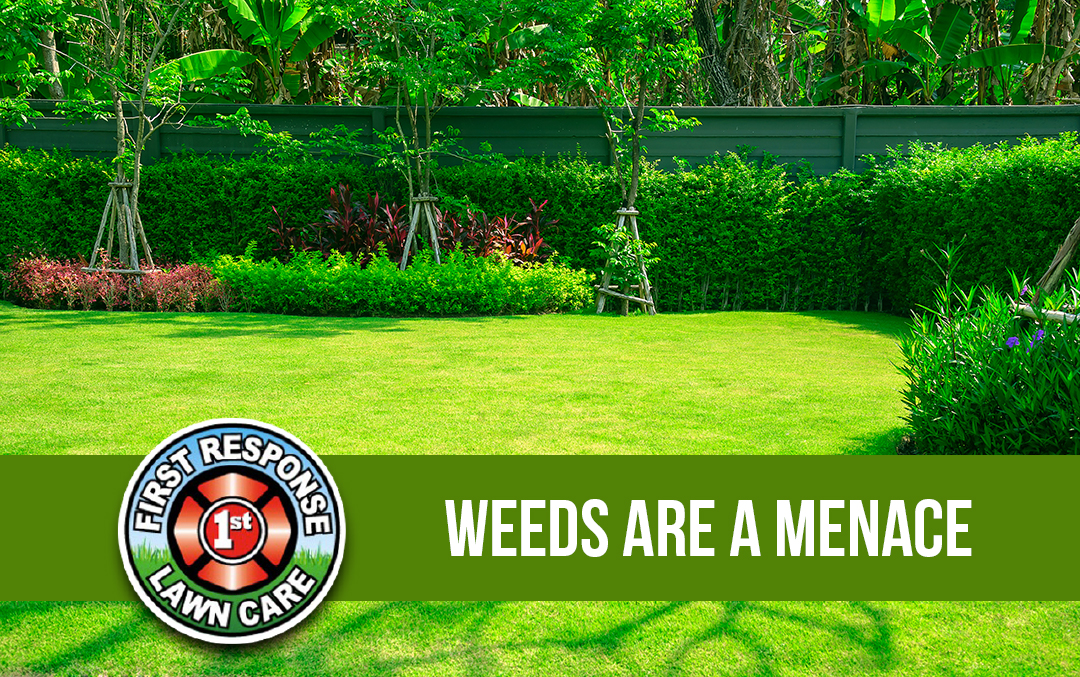 Weeds are a Menace