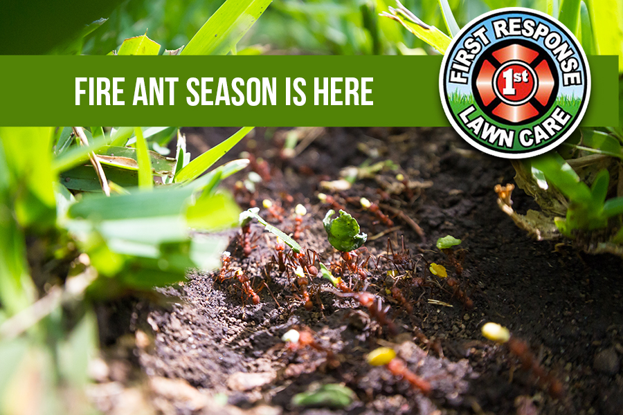 Fire Ant Season is Here