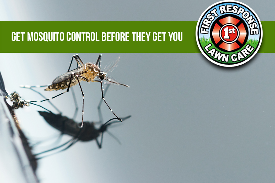 Get Mosquito Control Before They Get You