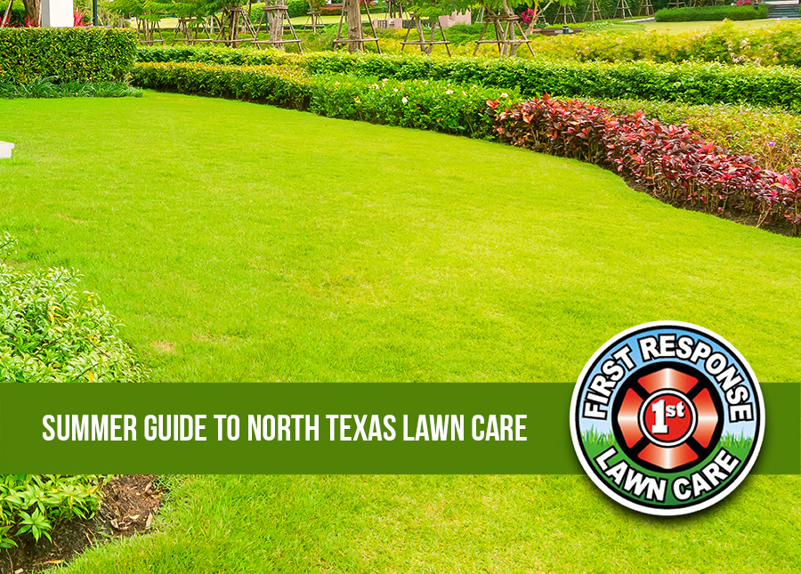 Summer Guide to North Texas Lawn Care