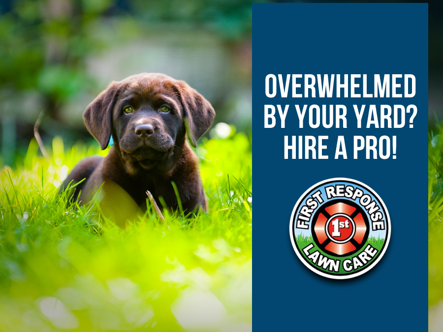8 Reasons to Outsource Your Lawn Mowing to the Pros