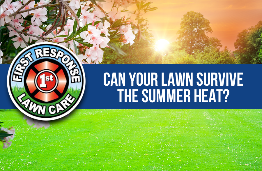 Can Your Lawn Survive the Texas Summer Heat?