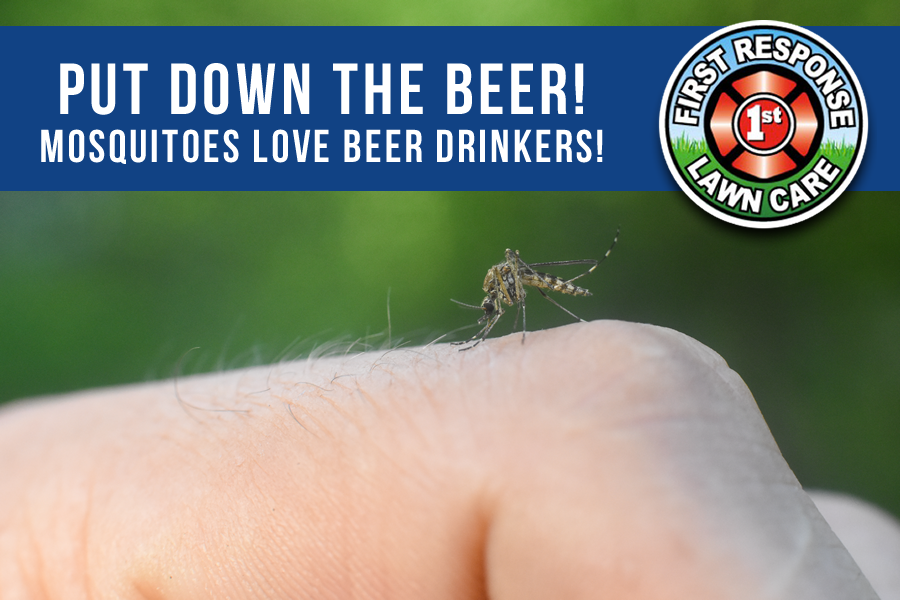 Mosquitoes Like Beer Drinkers