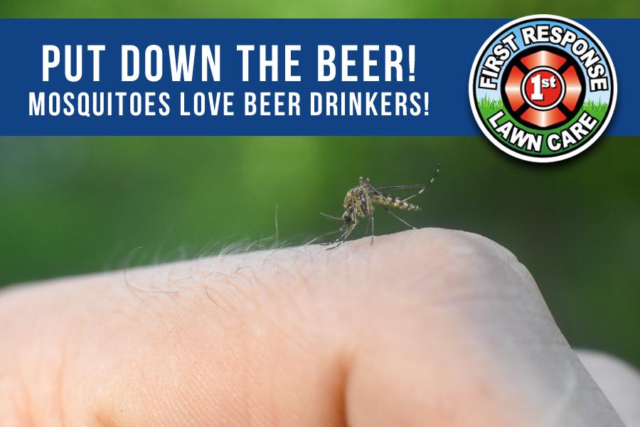 mosquitoes like beer