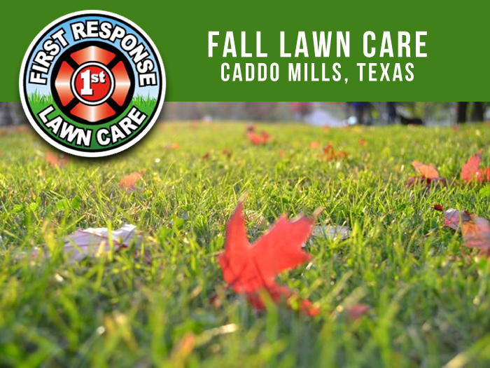 Fall Lawn Care Caddo Mills