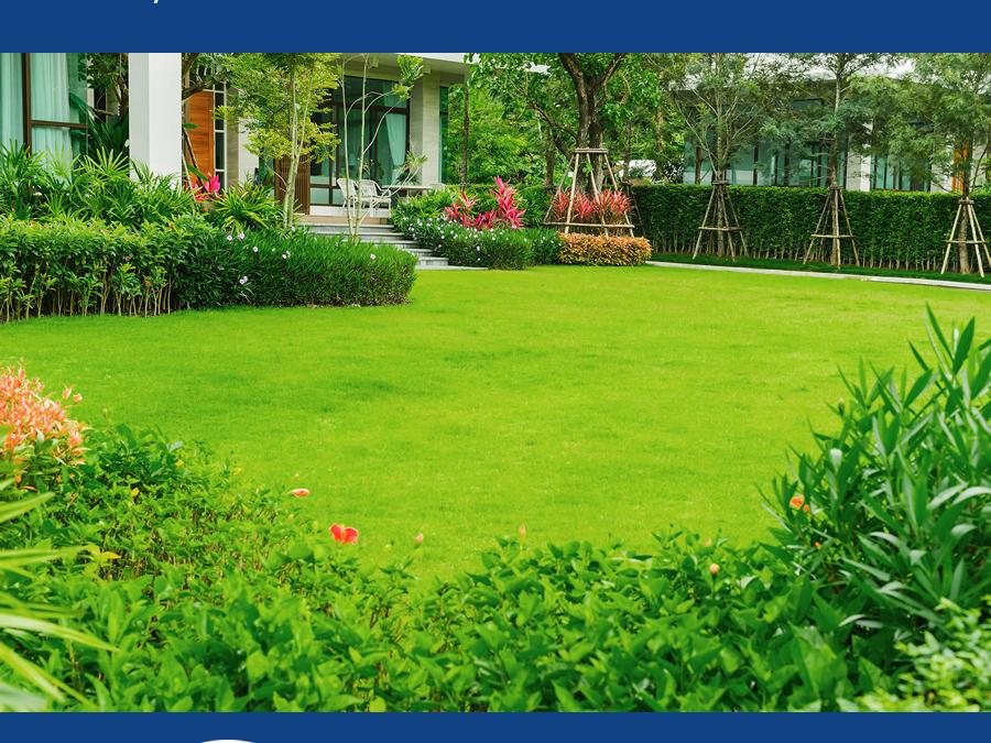 Summer Lawn Treatment